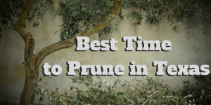 Happy Tree Service Best time to prune in Texas