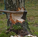 cut tree photo